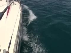 Une ballade en bateau - Tube SEX HD - MESVIP
